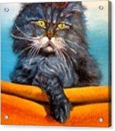 Cat.go To Swim.original Oil Painting Acrylic Print by Natalja Picugina