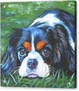 Cavalier King Charles Spaniel Tricolor Acrylic Print by Lee Ann Shepard