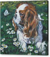Cavalier King Charles Spaniel With Butterfly Acrylic Print by Lee Ann Shepard