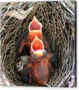 Cavernous Cardinals Acrylic Print by Al Powell Photography USA