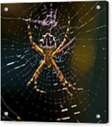 Charlotte's Web Acrylic Print by Thanh Thuy Nguyen