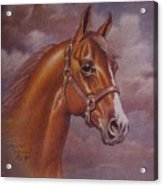 Chestnut Quarter Horse Acrylic Print by Dorothy Coatsworth