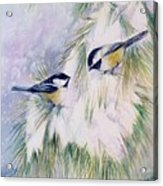Chickadee Chat Acrylic Print by Patricia Pushaw