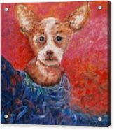 Chihuahua Blues Acrylic Print by Nadine Rippelmeyer