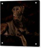 Chocolate Lab Dog Acrylic Print by Christine Till