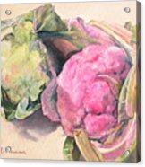 Choux Acrylic Print by Muriel Dolemieux
