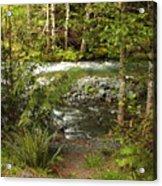 Clear Mountain Stream Acrylic Print by Carol Groenen