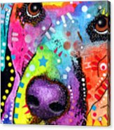 Closeup Labrador Acrylic Print by Dean Russo