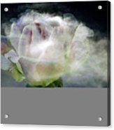 Cloud Rose Acrylic Print by Clayton Bruster
