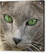 Clyde And His Green Eyes Acrylic Print by James Steele