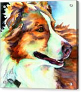 Cocoa Lassie Collie Dog Acrylic Print by Christy  Freeman