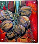 Coconuts Acrylic Print by Patti Schermerhorn