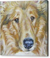 Collie Close Up Acrylic Print by Lee Ann Shepard