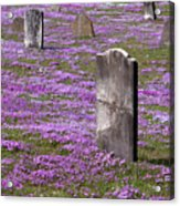 Colonial Tombstones Amidst Graveyard Phlox Acrylic Print by John Stephens
