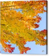 Colorful Autumn Reaching Out Acrylic Print by James BO  Insogna