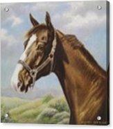 Commission Chestnut Horse Acrylic Print by Dorothy Coatsworth