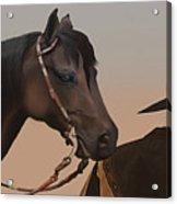 Companions Acrylic Print by Corey Ford