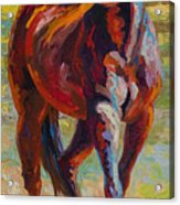 Corral Boss - Mustang Acrylic Print by Marion Rose