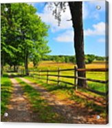 Country Road Acrylic Print by Catherine Reusch  Daley