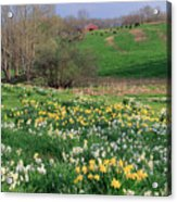 Country Spring Acrylic Print by Bill Wakeley