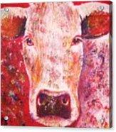Cow Acrylic Print by Anastasis  Anastasi