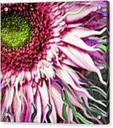 Crazy Daisy Acrylic Print by Christopher Beikmann