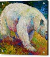 Creamy Vanilla - Kermode Spirit Bear Of Bc Acrylic Print by Marion Rose