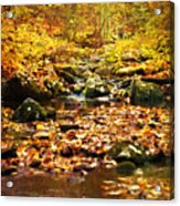 Creek In The Woods Acrylic Print by Kathy Jennings
