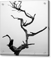 Crooked Tree Acrylic Print by Matt Hanson