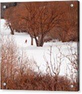 Crosscountry Skier Acrylic Print by Utah Images