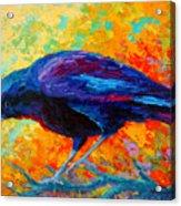 Crow IIi Acrylic Print by Marion Rose