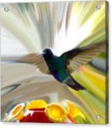 Cuenca Hummingbird Series 1 Acrylic Print by Al Bourassa