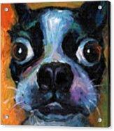 Cute Boston Terrier Puppy Art Acrylic Print by Svetlana Novikova