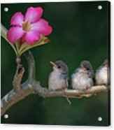 Cute Small Birds Acrylic Print by Photowork by Sijanto