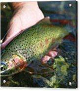 Cutthroat Trout On The Middle Fork Acrylic Print by Drew Rush