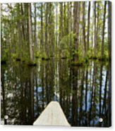 Cypress Garden Swamp Acrylic Print by Dustin K Ryan
