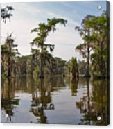 Cypress Trees And Spanish Moss In Lake Martin Acrylic Print by Louise Heusinkveld