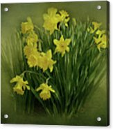 Daffodils Acrylic Print by Sandy Keeton