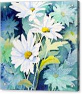 Daisies Acrylic Print by Sam Sidders