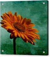 Daisy Daisy Acrylic Print by Georgia Fowler