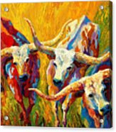 Dance Of The Longhorns Acrylic Print by Marion Rose