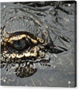 Dangerous Stalker Acrylic Print by Carolyn Marshall