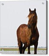 Dark Stallion Acrylic Print by Bob Decker