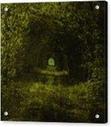 Dark Wood Acrylic Print by Steve K