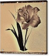 Daylily Of Old Acrylic Print by Marsha Heiken