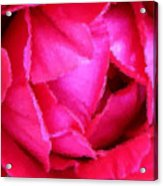 Deep Inside The Rose Acrylic Print by Kristin Elmquist