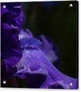 Deep Sparkling Iris Acrylic Print by Joyce Hutchinson