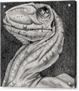 Deino Hatch Sketch Acrylic Print by Michael McKenzie
