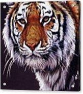 Desperado Acrylic Print by Barbara Keith