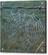 Dew On The Web Acrylic Print by Douglas Barnett